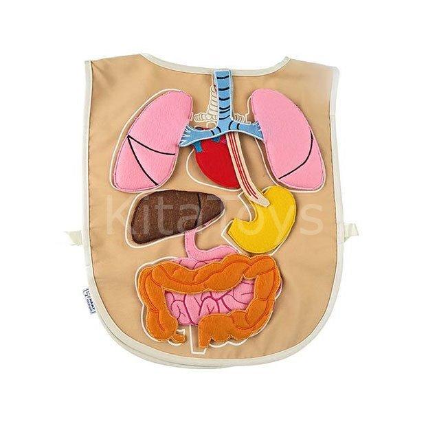 Fen Merkezi Organ Onlugu Ana Kita Egitim Malzemeleri Kitatoys Com