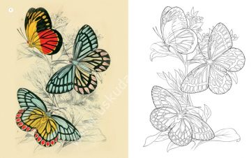Her Yaş Için Boyama Kelebekler Edam Resim Teknik çizim Kitapları
